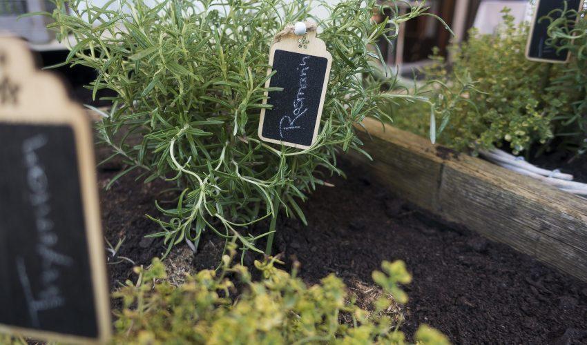 Ein Gemüsehochbeet mit Pflanzen